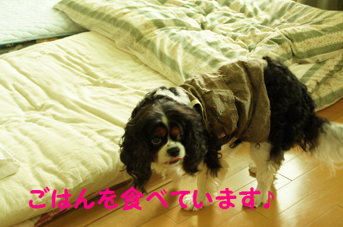 2013091815120073b.png