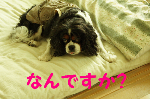 2013091815225505c.png