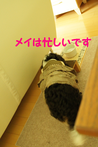 2013091815271593f.png