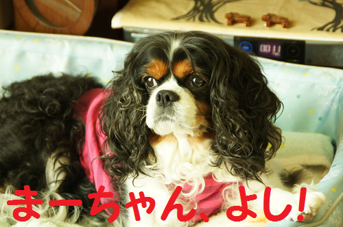 20130928171346a68.png