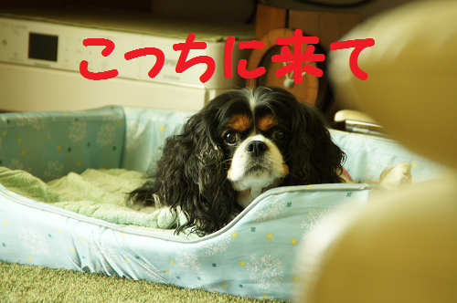 20130928171347a6b.png