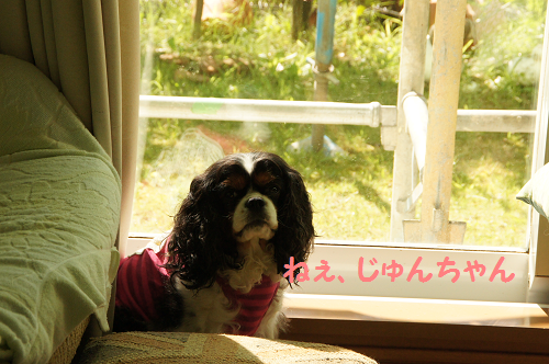 201310121604224f2.png