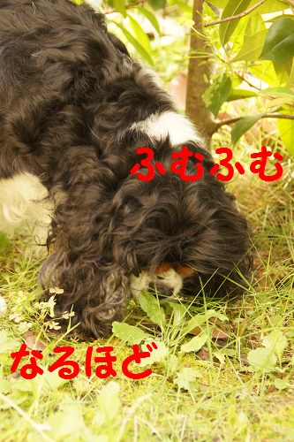 20131015131610088.png