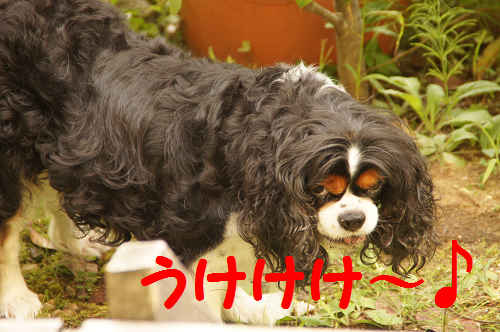 20131015131808bad.png