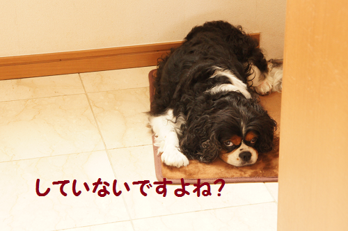 201310181655026a5.png