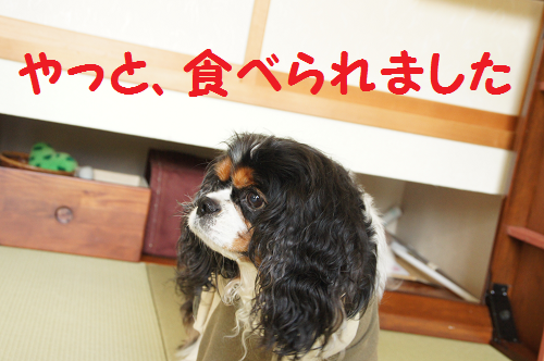 20131022160935ed6.png