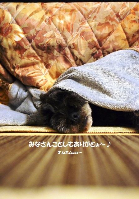 033_20121229225049.jpg
