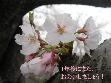 IMG_0091_20130409222112.jpg