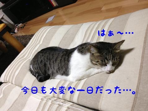 fc2blog_201307112229376d5.jpg