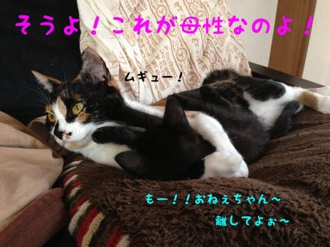 fc2blog_2013080419074322f.jpg