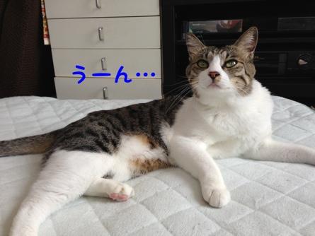 fc2blog_201308180301264ee.jpg
