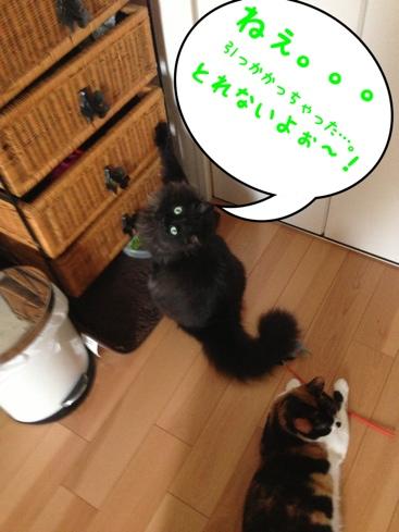 fc2blog_20130821025114e55.jpg
