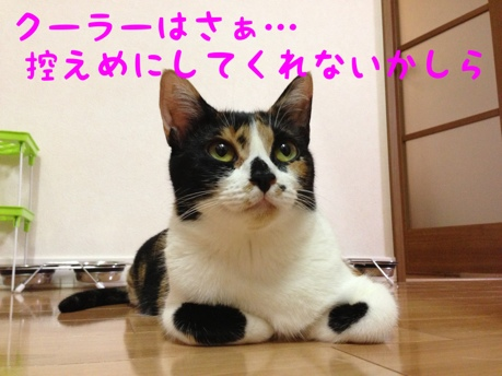 fc2blog_20130905235602220.jpg