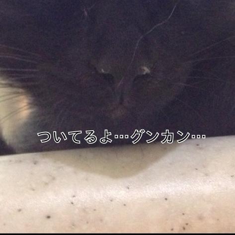 fc2blog_201309070258259e7.jpg
