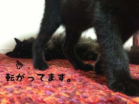 fc2blog_201309190024214e5.jpg