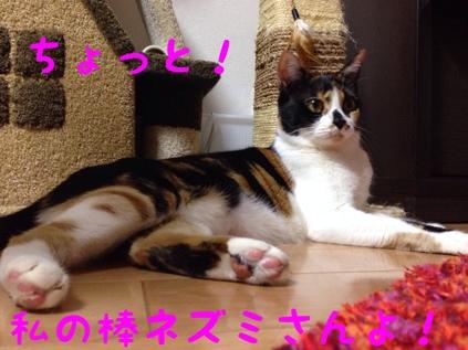 fc2blog_20130922092122016.jpg