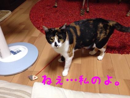 fc2blog_201309220921389c7.jpg