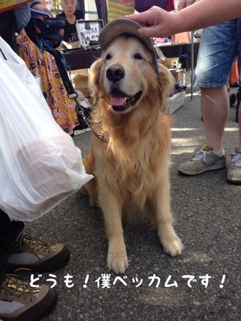 fc2blog_20130930121602bdd.jpg