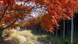 20121208水神05