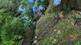2013070621世紀の森08