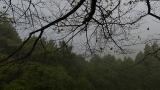 20131027原生の森06