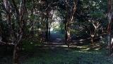 20131027原生の森11
