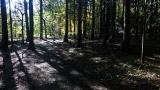 20131027原生の森12