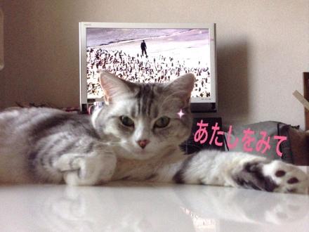fc2blog_20130819132351fbd.jpg