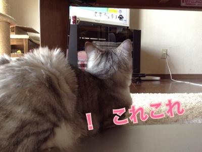 fc2blog_201309191204204f6.jpg