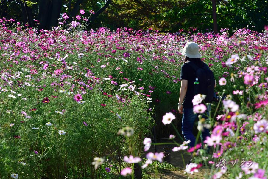 昭和記念公園3(2)変更済