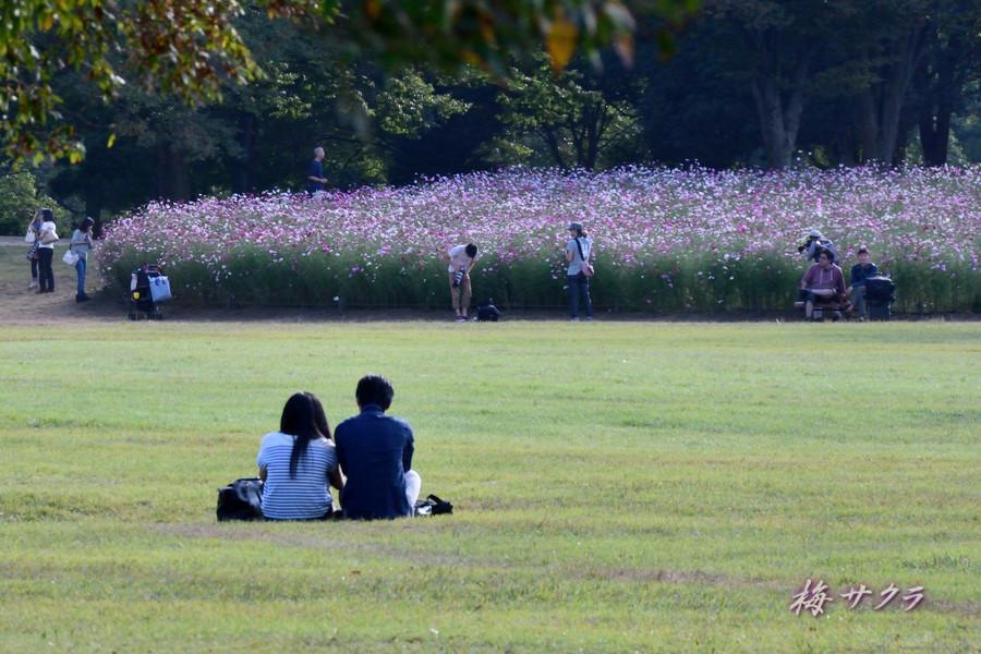 昭和記念公園3(10)変更済
