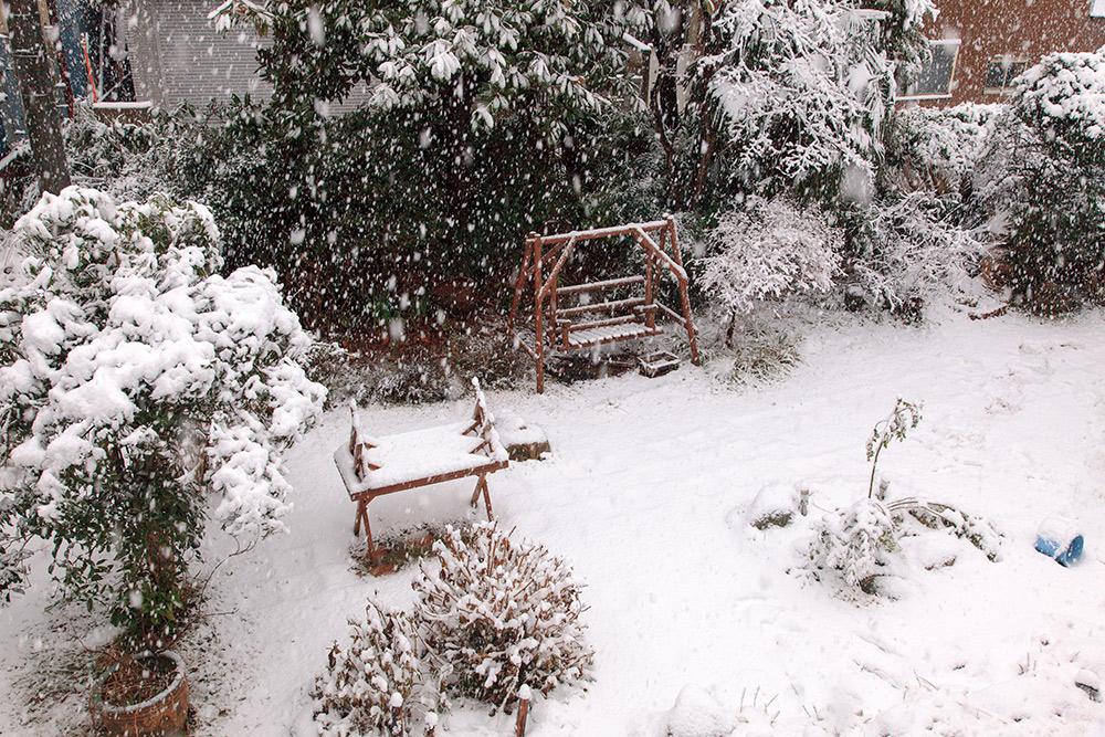 130114庭雪