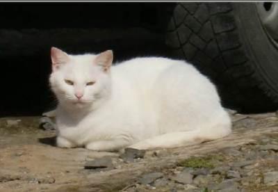 猫の神様を求めて 2010年05月