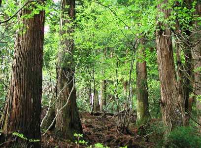 安曇川流域の森