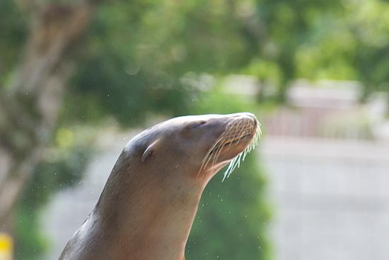 東山動物園2-8