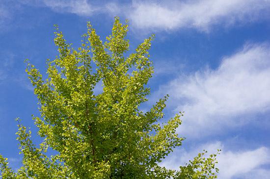 季節の風景-7