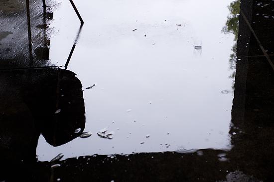 雨の森林公園-10