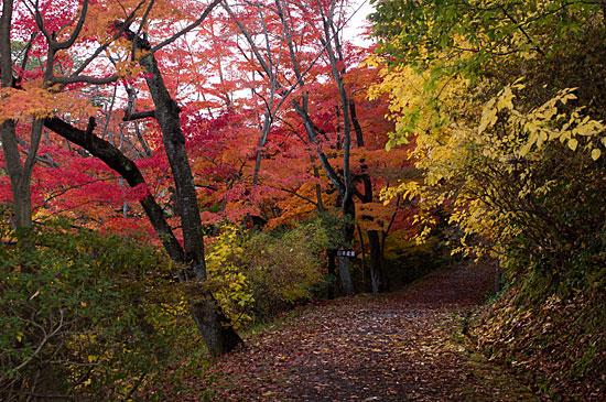 森林公園-9