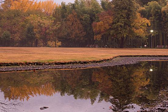 水面に映す紅葉風景