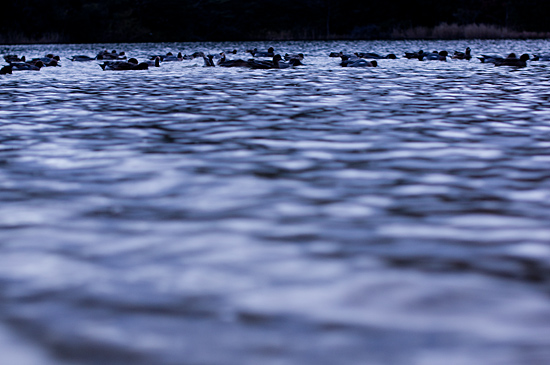 牧野ヶ池竹林-10