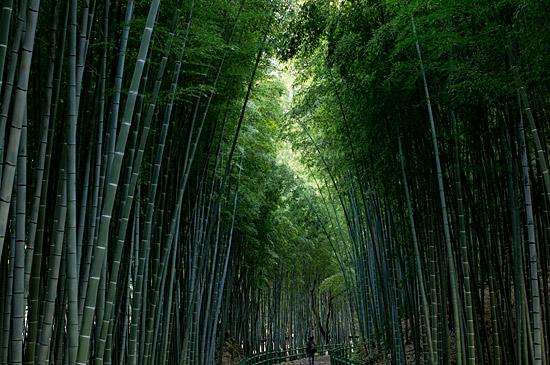 牧野ヶ池竹林-2