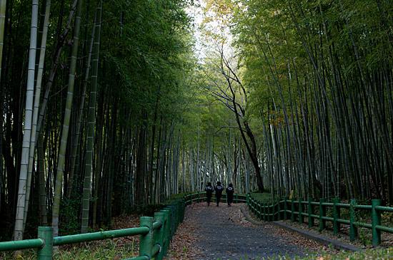 牧野ヶ池竹林-7