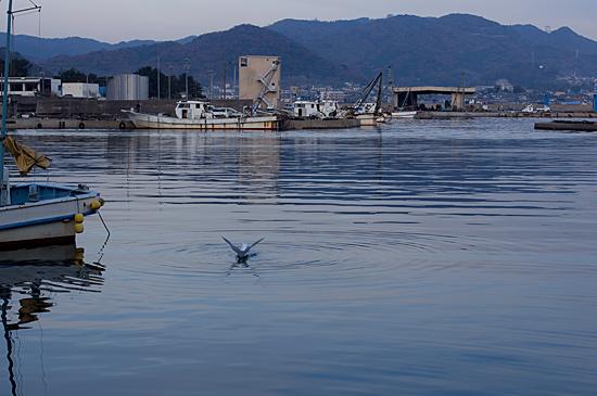 吉良の海-9