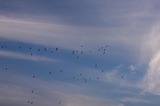鳥の風景-5