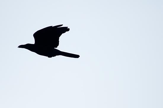 鳥の風景-6