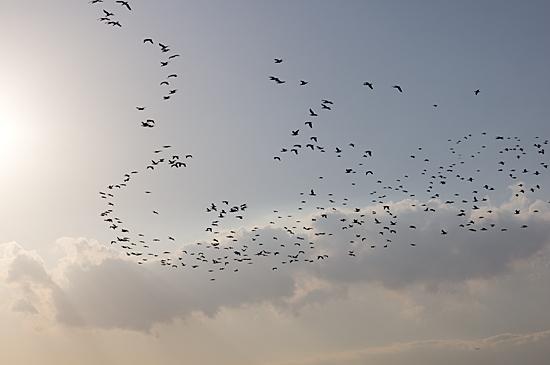 鳥の風景-8