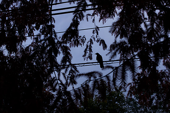 鳥の風景-9