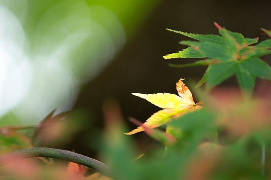植物園便り-12