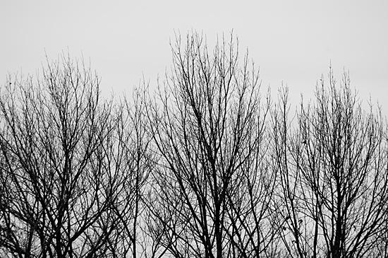 冬のモノクロ-3