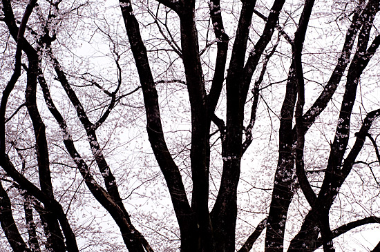 森林公園-8